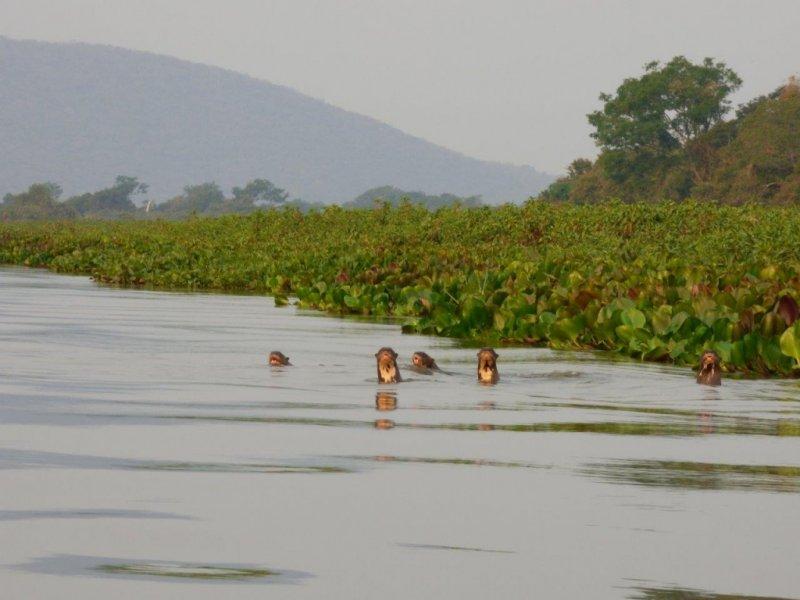 Pantanal Sul e Serra do Amolar - Créditos: Douglas Simões