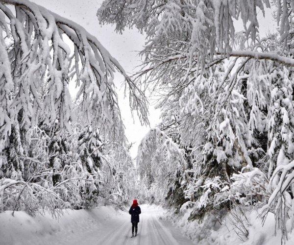 Bosque Nevado Ushuaia