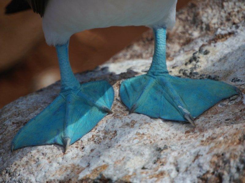 Fauna de Galápagos