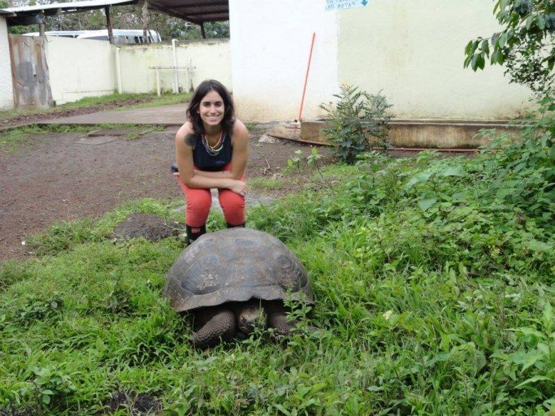 Tartarugas Gigantes de Galápagos