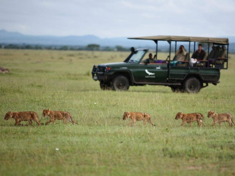 Safari na África