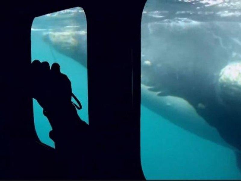 Avistagem de Baleias - Yellow Submarine