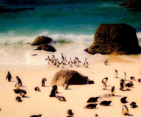 Boulders Beach - Cape Town