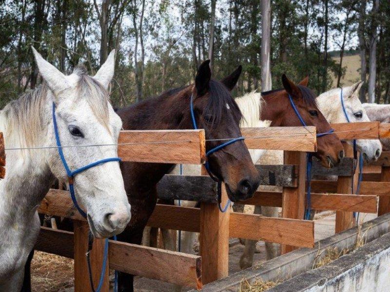 Passeios a Cavalo - Fazenda Santa Vitoria