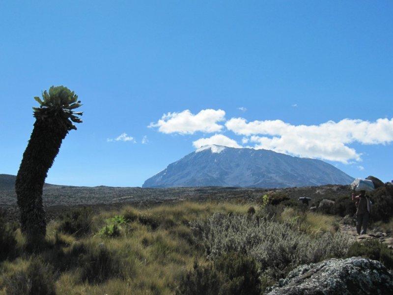 Kilimanjaro ao fundo
