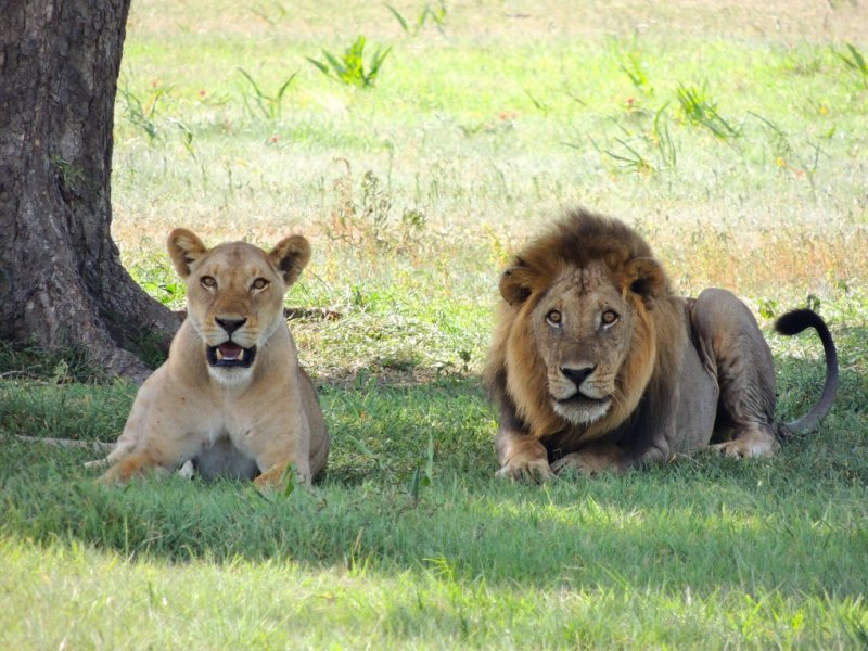 Safari na Tanzania