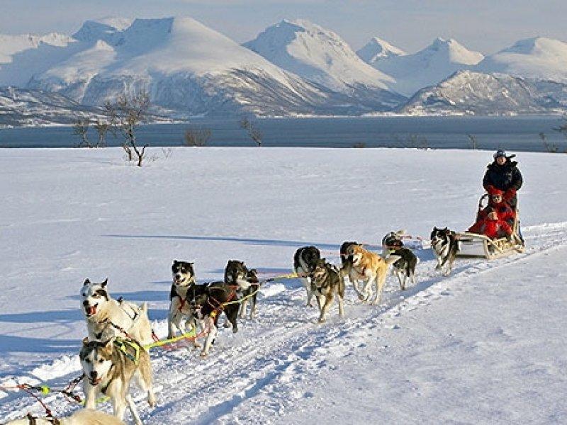 Treno puxado por Huskies em Ushuaia (Noruega)