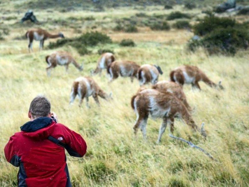 Avistagem de Gnacos - Torres del Paine