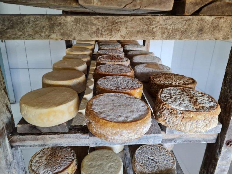 Degustação de queijos