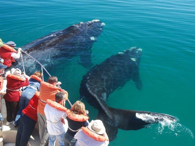 Avistagem de Baleias