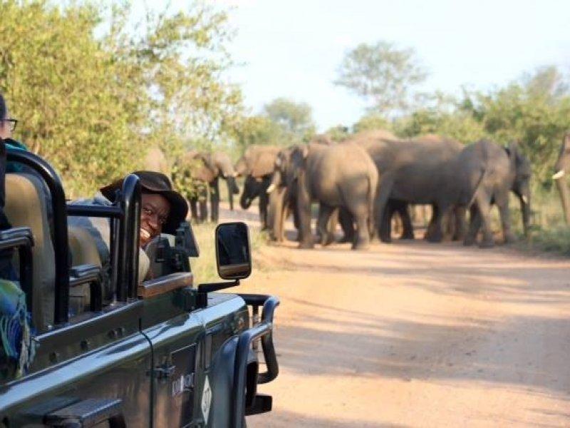 Dia de Safari