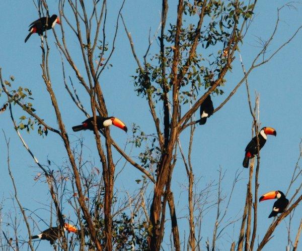 Pousada Trijunção e Parque Nacional Grande Sertão Veredas