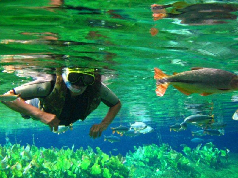 Mergulho Superficial em Bonito