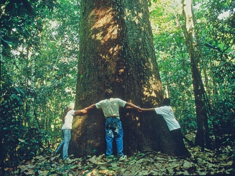 Sul da Amazônia