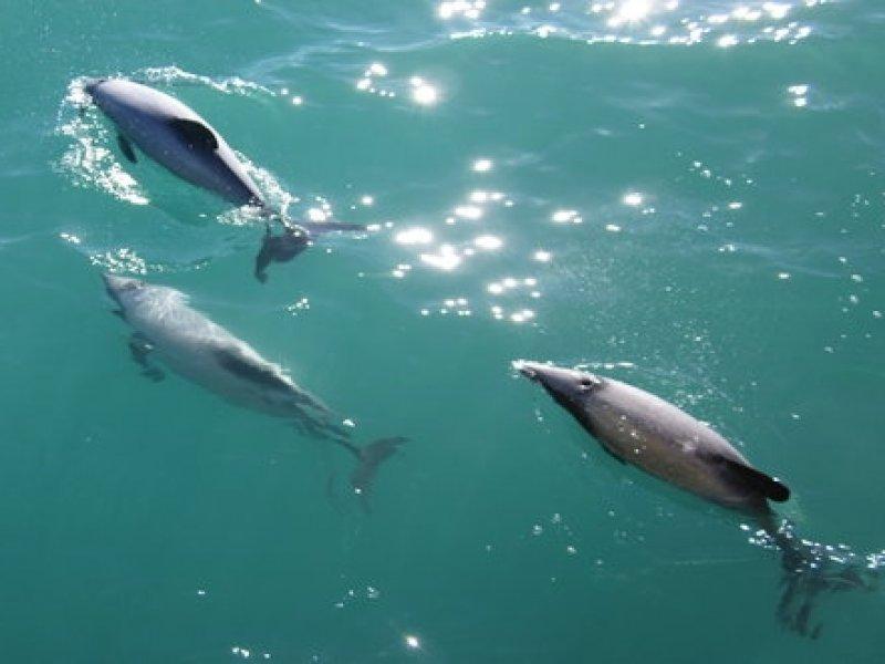 Golfinhos - Whale Watch