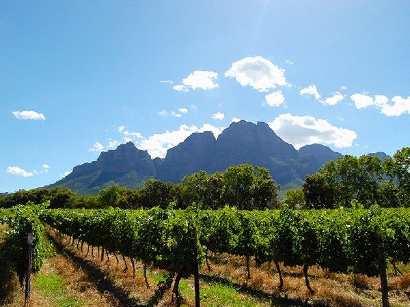 Vinícolas de Stellenbosch