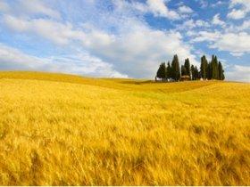 Itália Cicloturismo - Paisagens da Toscana