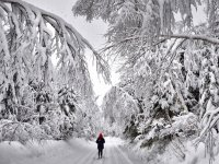 Patagonia Neve - Paisagens de El Calafate e Ushuaia