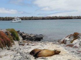 NATAL OU REVEILLON - Equador - Combinado das Ilhas Galápagos