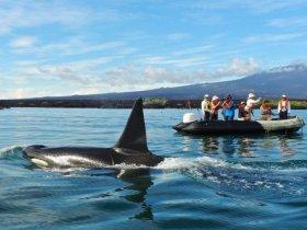 Equador - Cruzeiro em Galápagos - Ilhas do Oeste - Iate Santa Cruz II