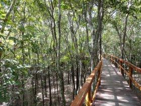 REVEILLON - Amazônia - Juma Amazon Lodge