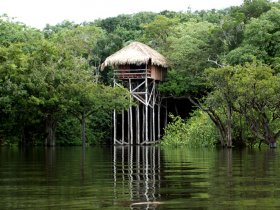Amazônia - Amazon Juma Lodge com Pernoite na Selva