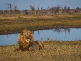 Botswana - Delta do Okavango e Reserva Moremi