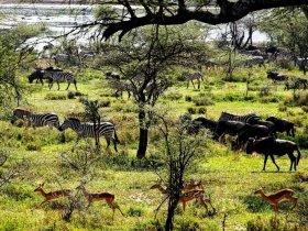 África - Safari na Tanzânia