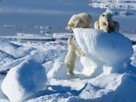 Cruzeiro na Noruega - Safari Urso Polar