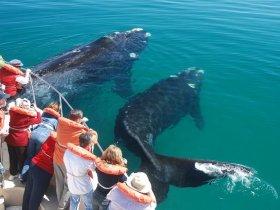 Patagonia  Baleias e Pinguins - Península Valdés