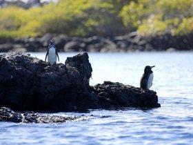 Equador - O Melhor de Galápagos
