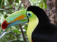 GRUPO PÁSCOA - Costa Rica - Vulcões, Parque Nacionais e Praias