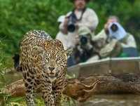 Cruzeiro Pantanal - Expedição em Busca da Onça Pintada