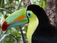 PÁSCOA - Costa Rica - Vulcões, Parque Nacionais e Praias